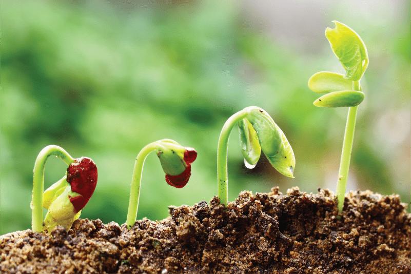 grow reach